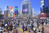 渋谷のスクランブル交差点 26121031613| 写真素材・ストックフォト・画像・イラスト素材|アマナイメージズ