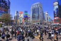渋谷のスクランブル交差点 26121031634| 写真素材・ストックフォト・画像・イラスト素材|アマナイメージズ