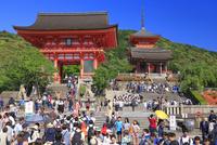新緑の清水寺