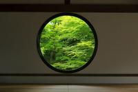 新緑の源光庵 26121031795| 写真素材・ストックフォト・画像・イラスト素材|アマナイメージズ