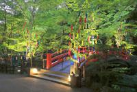 北野天満宮の御手洗祭と七夕祭 26121032363| 写真素材・ストックフォト・画像・イラスト素材|アマナイメージズ