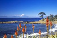 秋谷海岸 26134001847| 写真素材・ストックフォト・画像・イラスト素材|アマナイメージズ