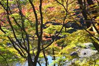 小石川後楽園 26134001874  写真素材・ストックフォト・画像・イラスト素材 アマナイメージズ