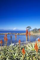 秋谷海岸 26134001900| 写真素材・ストックフォト・画像・イラスト素材|アマナイメージズ