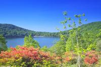 赤城山の小沼とツツジ 26134002242  写真素材・ストックフォト・画像・イラスト素材 アマナイメージズ
