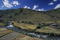 稲刈りの田園