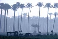 ナイル河谷の朝