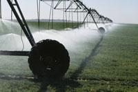 センターピポットによる灌漑