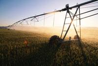 砂漠の灌漑農業