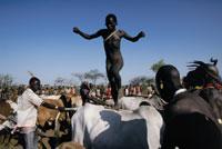 ハマル族の牛の跳躍式