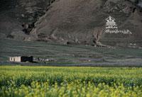 仏塔のデザイン 26140001558| 写真素材・ストックフォト・画像・イラスト素材|アマナイメージズ