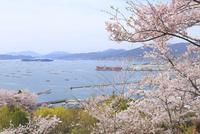 正福寺山公園の桜