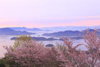 筆影山公園の桜