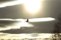 飛翔するタンチョウ 26161000088| 写真素材・ストックフォト・画像・イラスト素材|アマナイメージズ