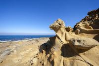 畳ヶ浦 千畳敷 動物の顔の様に見える岩