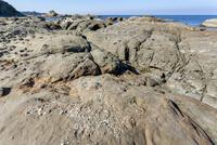 畳ヶ浦 千畳敷の化石