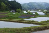 水張る山王寺の棚田