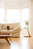 リビングルームとソファに座る犬