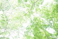 木の枝と葉