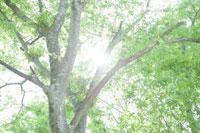 木の枝と葉 30006003617| 写真素材・ストックフォト・画像・イラスト素材|アマナイメージズ