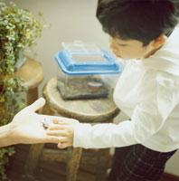 クワガタに触る日本人の男の子 30010000241A| 写真素材・ストックフォト・画像・イラスト素材|アマナイメージズ