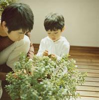 植物を見る父親と息子 30010000243| 写真素材・ストックフォト・画像・イラスト素材|アマナイメージズ