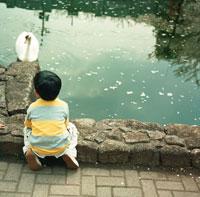 池の白鳥を眺める男の子 30010000285| 写真素材・ストックフォト・画像・イラスト素材|アマナイメージズ