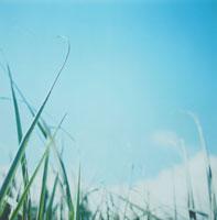 牧草と空 30016000036| 写真素材・ストックフォト・画像・イラスト素材|アマナイメージズ