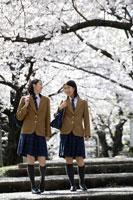 桜並木を通学する女子高生2人