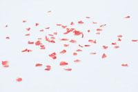 雪の上に舞い散った花びら