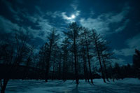 北海道の月夜の雪景色