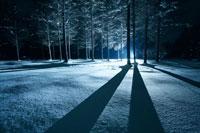夜の雪の中で強い光に照らされる木々