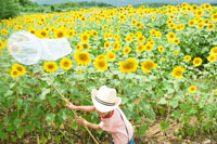 ひまわり畑で虫取りする少年 30034000282| 写真素材・ストックフォト・画像・イラスト素材|アマナイメージズ