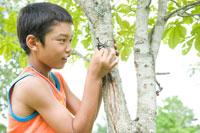 カブト虫を捕まえる少年