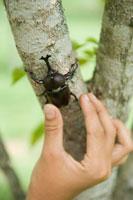 カブト虫を捕まえる少年の手元