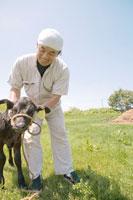 子牛の世話をする酪農家