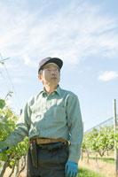 ワイン用ブドウ畑で空を見上げる農園主