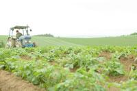 ジャガイモ畑をトラクターで整備する若い農夫