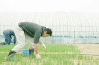 小ねぎの畑の世話をする若い農夫