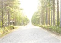 道と並んだ樹木 31005000004| 写真素材・ストックフォト・画像・イラスト素材|アマナイメージズ