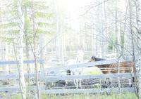 森の中で飼育された馬 31005000008| 写真素材・ストックフォト・画像・イラスト素材|アマナイメージズ
