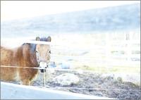飼育された馬 31005000012| 写真素材・ストックフォト・画像・イラスト素材|アマナイメージズ