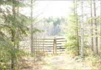 馬場のフェンスと樹木