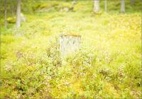 切株に生えた緑の植物