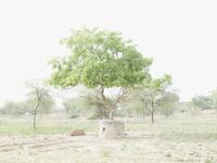 石の鉢に植わってる木 31005000017| 写真素材・ストックフォト・画像・イラスト素材|アマナイメージズ