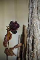 枯れたバラと木