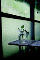 テーブルに置いた植物 31017000051| 写真素材・ストックフォト・画像・イラスト素材|アマナイメージズ