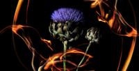 花と炎 31019000003| 写真素材・ストックフォト・画像・イラスト素材|アマナイメージズ