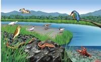 水辺で見られる生き物