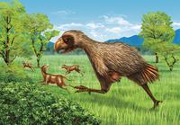 恐竜絶滅後に現れた巨大な恐鳥ディアトリマ(哺乳類ヒラコテリウムに襲いかかるディアトリマのイメージ)
